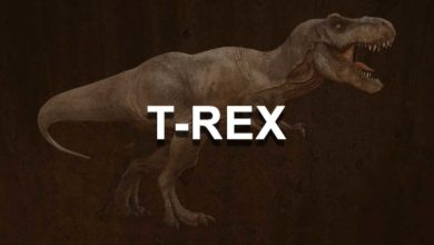 Photo of T-Rex NVIDIA GPU Miner (Windows/Linux) supported algorithms & performance
